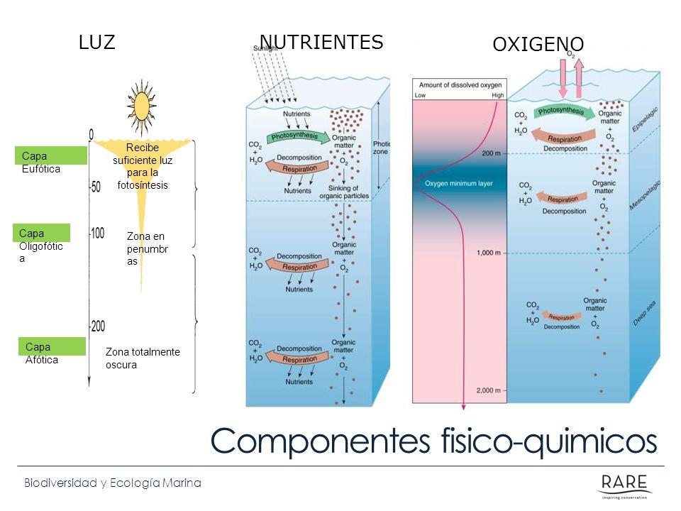Biodiversidad y Ecología Marina NUTRIENTES OXIGENO Componentes fisico-quimicos Capa Eufótica Capa Afótica Capa Oligofótic a Recibe suficiente luz para