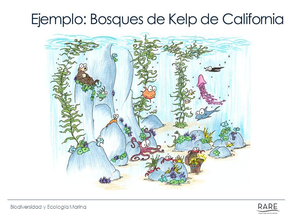 Biodiversidad y Ecología Marina Ejemplo: Bosques de Kelp de California