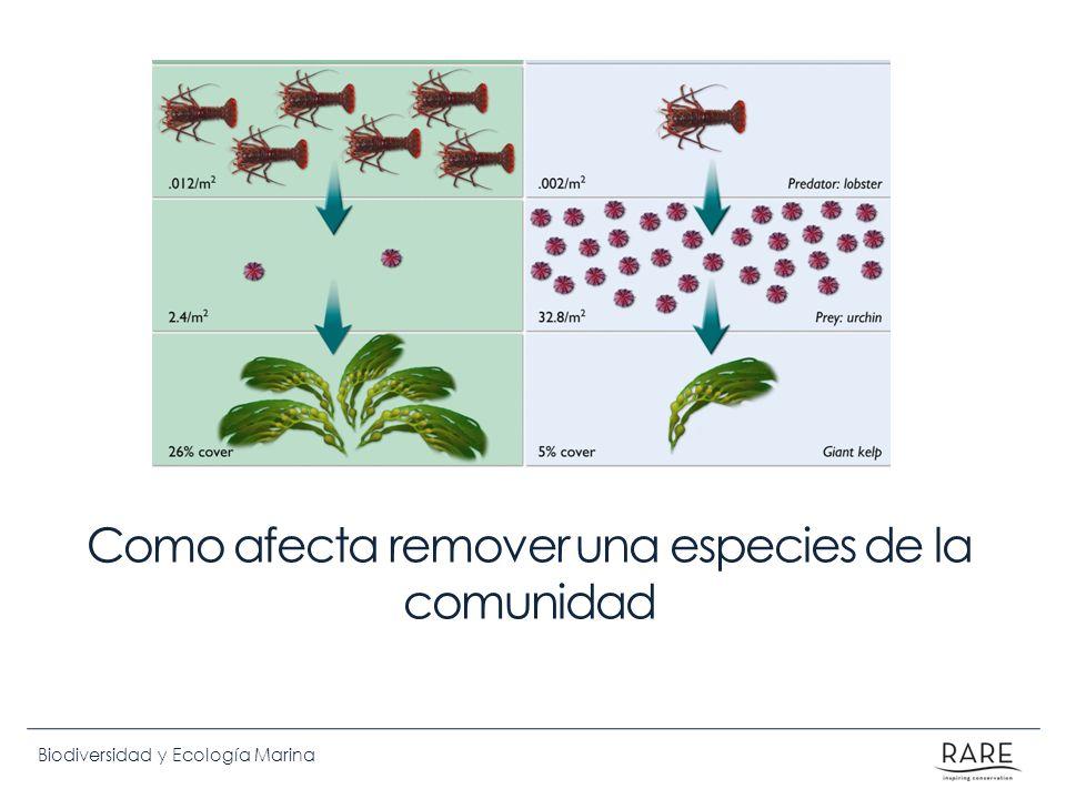 Biodiversidad y Ecología Marina Como afecta remover una especies de la comunidad