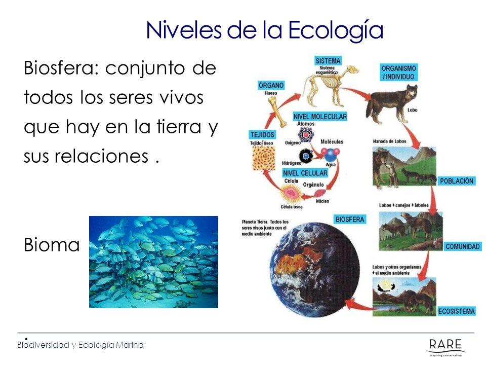 Biodiversidad y Ecología Marina Niveles de la Ecología Biosfera: conjunto de todos los seres vivos que hay en la tierra y sus relaciones. Bioma.