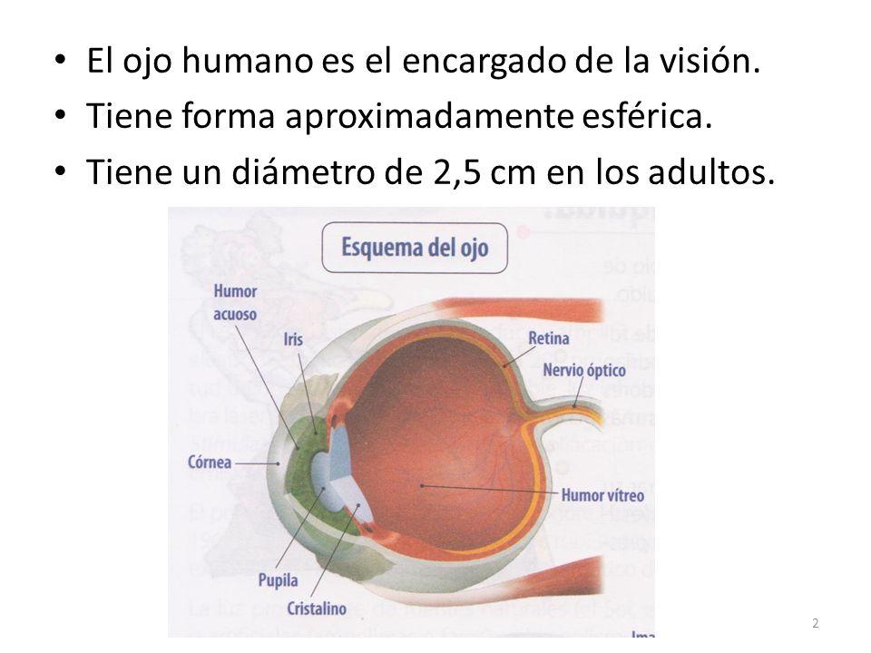 El ojo humano es el encargado de la visión.Tiene forma aproximadamente esférica.