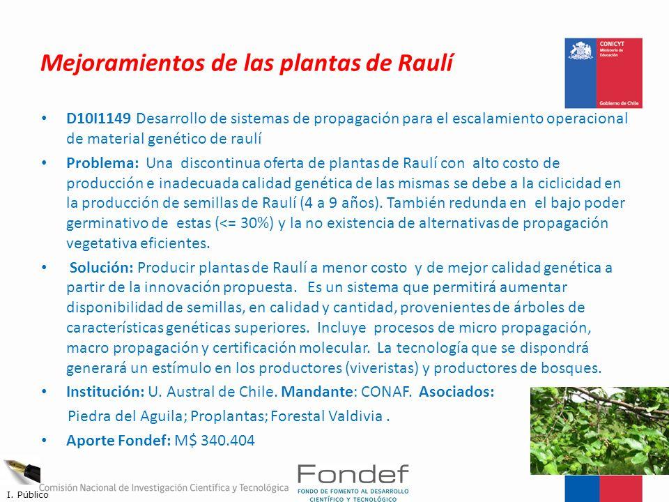 Mejoramientos de las plantas de Raulí D10I1149 Desarrollo de sistemas de propagación para el escalamiento operacional de material genético de raulí Pr