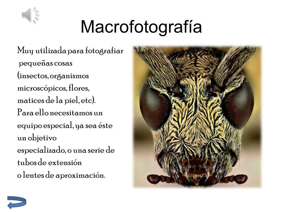 Macrofotografía Muy utilizada para fotografiar pequeñas cosas (insectos, organismos microscópicos, flores, matices de la piel, etc).