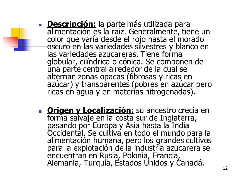 11 REMOLACHA (Beta vulgaris) I. CARACTERÍSTICAS GENERALES Botánica: la remolacha es una hortaliza de raíz redonda, perteneciente a la familia de las Q