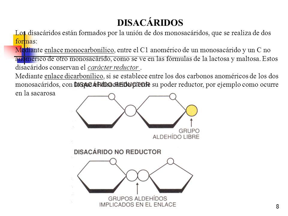8 DISACÁRIDOS Los disacáridos están formados por la unión de dos monosacáridos, que se realiza de dos formas: Mediante enlace monocarbonílico, entre el C1 anomérico de un monosacárido y un C no anomérico de otro monosacárido, como se ve en las fórmulas de la lactosa y maltosa.