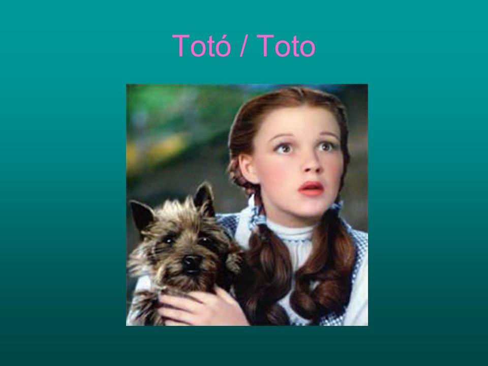 Totó / Toto