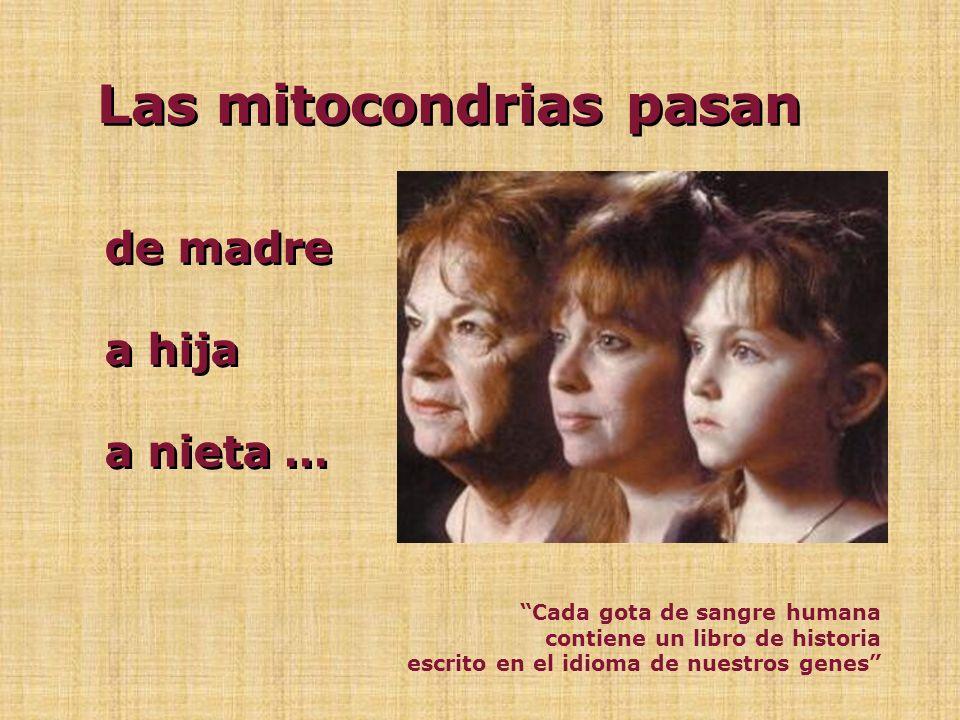 Los cromosomas se heredan de madre y padre Las mitocondrias sólo se heredan de la madre TODAS NUESTRAS MITOCONDRIAS SON COPIAS DE LAS QUE HABÍAN EN EL