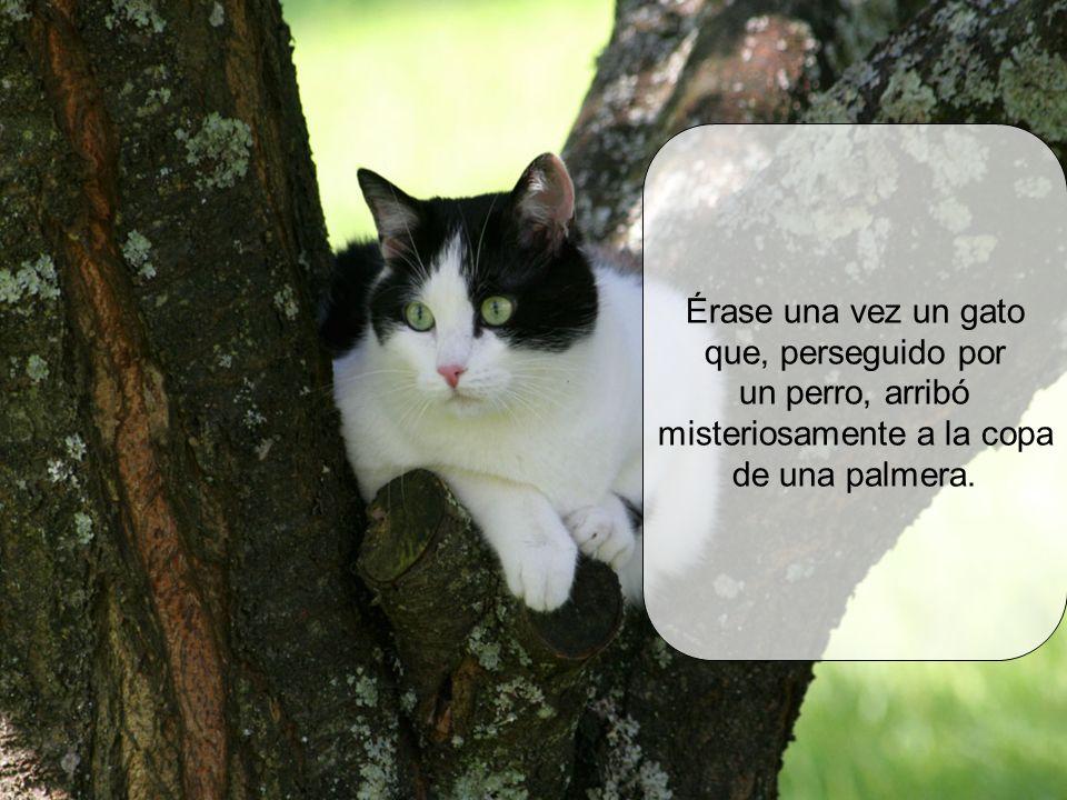 Érase una vez un gato que, perseguido por un perro, arribó misteriosamente a la copa de una palmera.