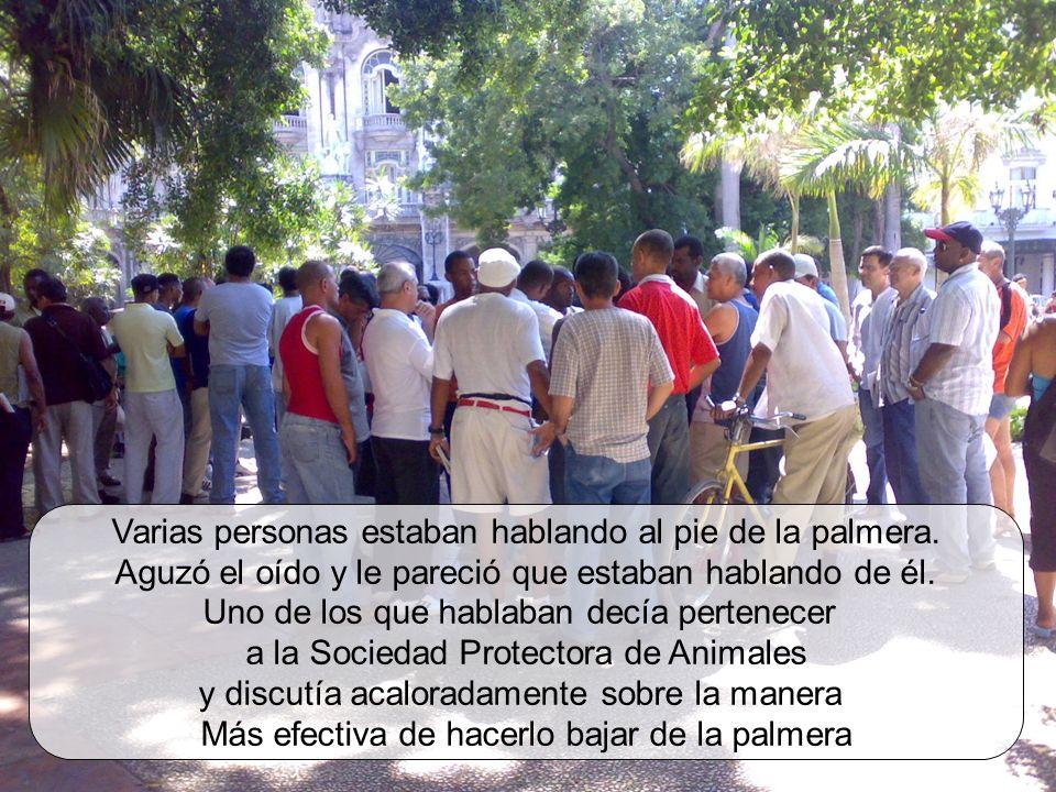 Varias personas estaban hablando al pie de la palmera.