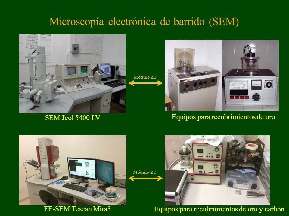 Microscopía electrónica de barrido (SEM) SEM Jeol 5400 LV Equipos para recubrimientos de oro FE-SEM Tescan Mira3 Equipos para recubrimientos de oro y carbón Módulo Z1 Módulo Z2