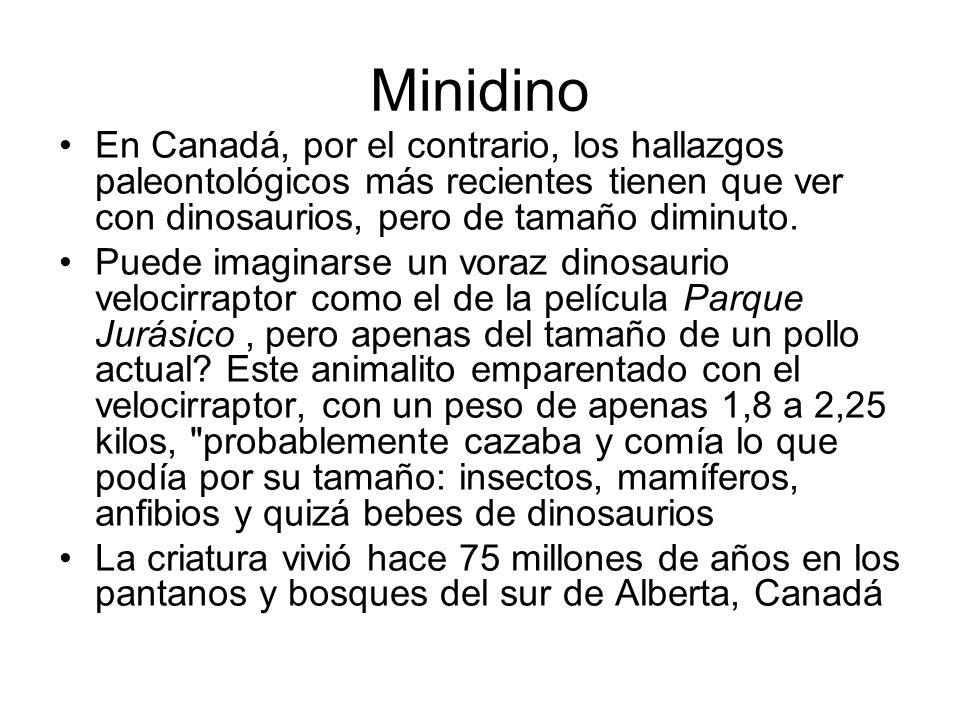 Minidino En Canadá, por el contrario, los hallazgos paleontológicos más recientes tienen que ver con dinosaurios, pero de tamaño diminuto.