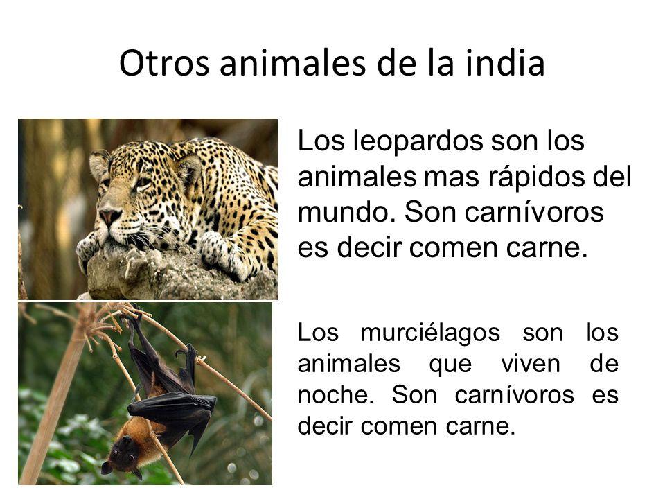 Los animales de la india Los tigres son los animales mas feroces de la india. Son carnívoros es decir comen carne. El mas típico en la india es el tig
