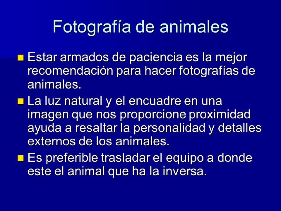 Fotografía de animales Estar armados de paciencia es la mejor recomendación para hacer fotografías de animales.