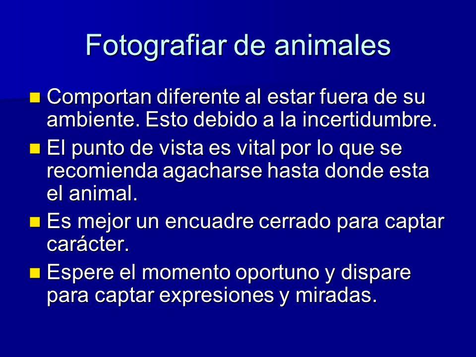 Fotografiar de animales Comportan diferente al estar fuera de su ambiente.