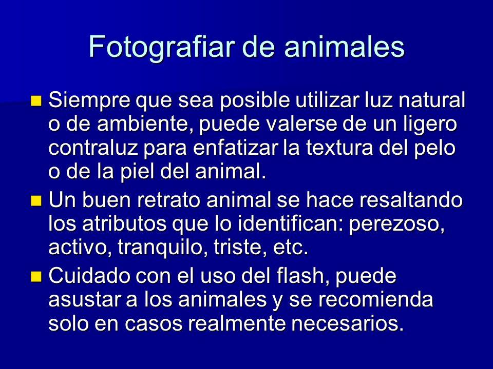 Fotografiar de animales Siempre que sea posible utilizar luz natural o de ambiente, puede valerse de un ligero contraluz para enfatizar la textura del pelo o de la piel del animal.