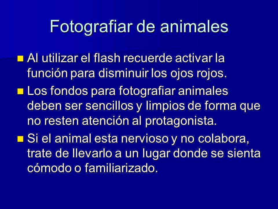 Fotografiar de animales Al utilizar el flash recuerde activar la función para disminuir los ojos rojos.