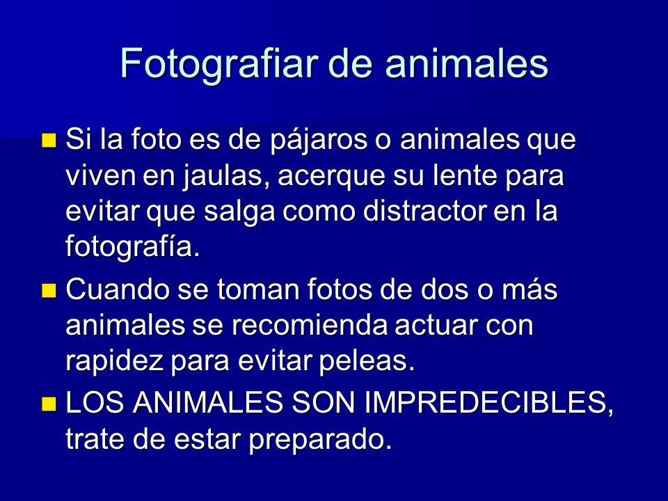 Fotografiar de animales Si la foto es de pájaros o animales que viven en jaulas, acerque su lente para evitar que salga como distractor en la fotografía.