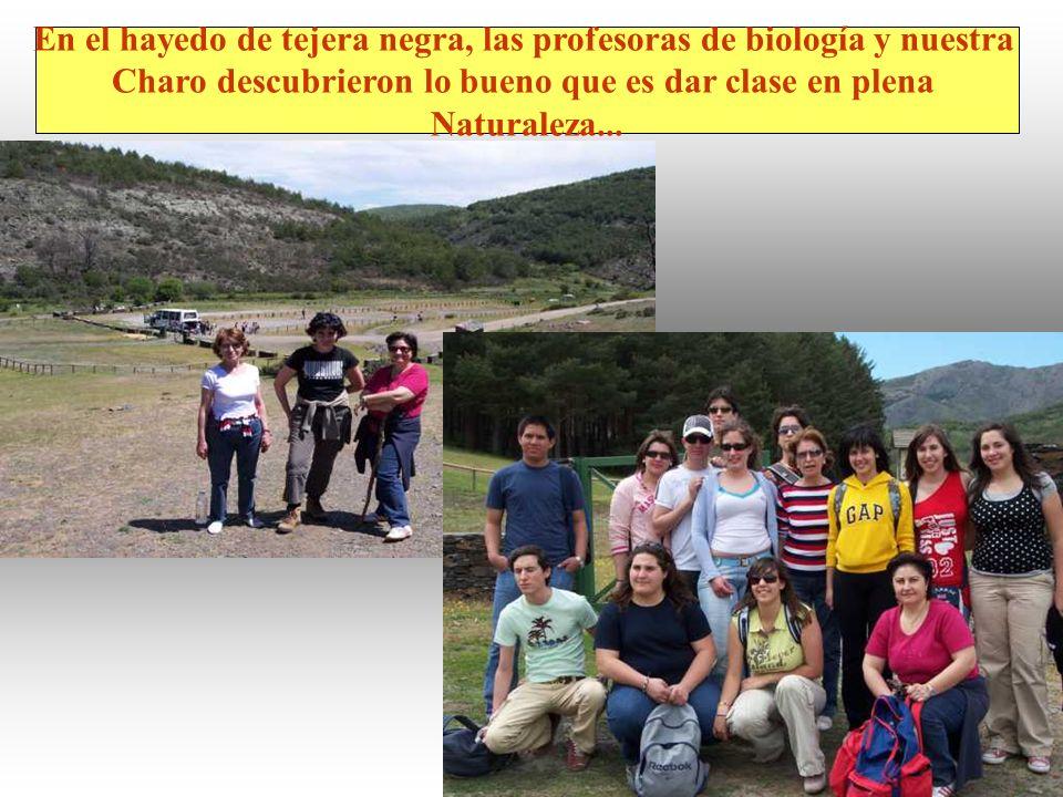 En el hayedo de tejera negra, las profesoras de biología y nuestra Charo descubrieron lo bueno que es dar clase en plena Naturaleza...