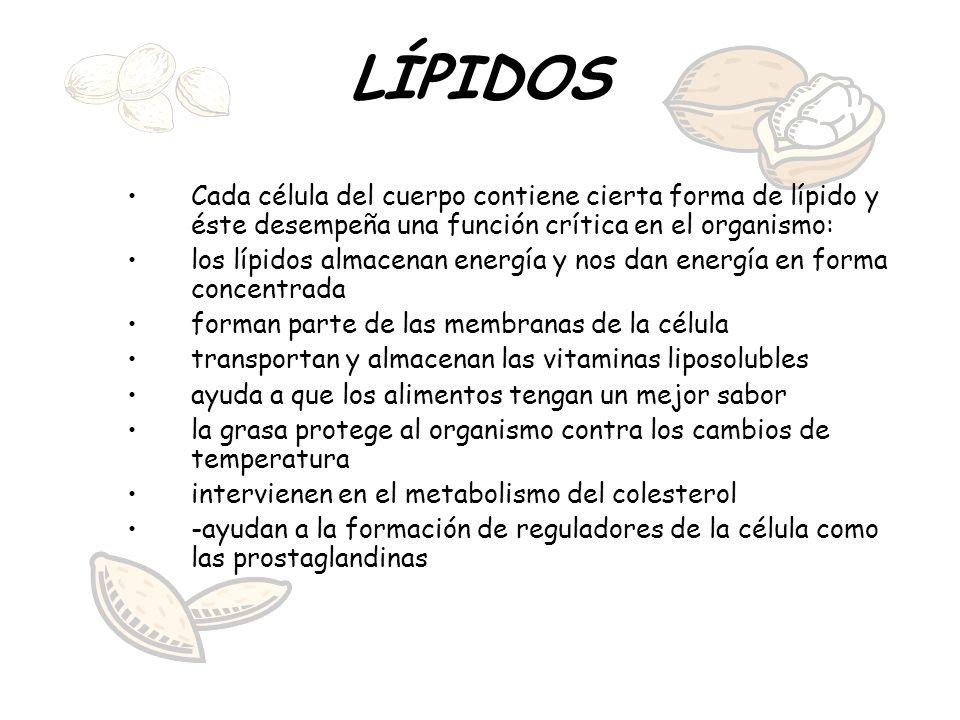LÍPIDOS Cada célula del cuerpo contiene cierta forma de lípido y éste desempeña una función crítica en el organismo: los lípidos almacenan energía y n