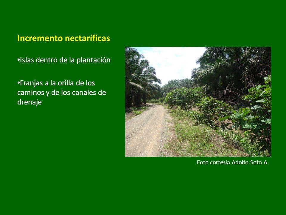 Incremento nectaríficas Islas dentro de la plantación Franjas a la orilla de los caminos y de los canales de drenaje Foto cortesía Adolfo Soto A.
