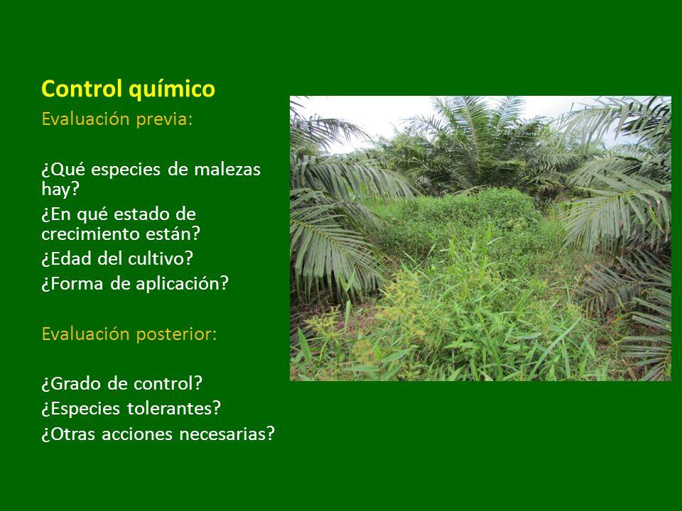 Evaluación previa: ¿Qué especies de malezas hay? ¿En qué estado de crecimiento están? ¿Edad del cultivo? ¿Forma de aplicación? Evaluación posterior: ¿