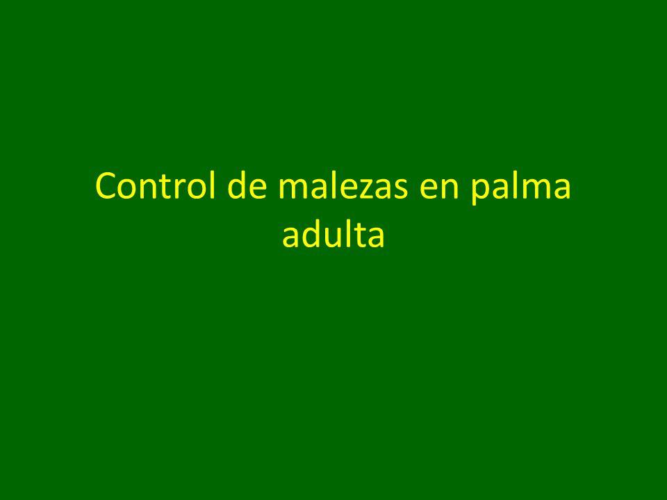 Control de malezas en palma adulta