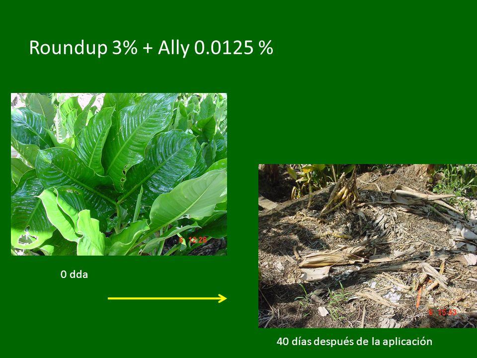 Roundup 3% + Ally 0.0125 % 40 días después de la aplicación 0 dda