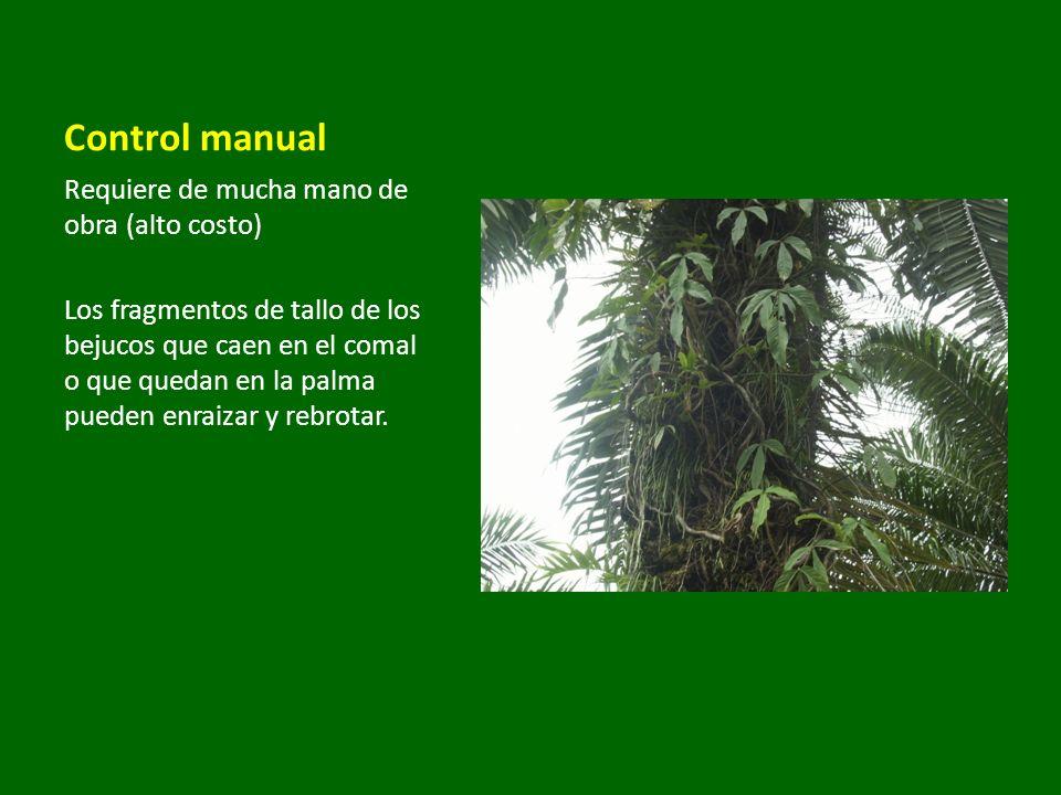 Control manual Requiere de mucha mano de obra (alto costo) Los fragmentos de tallo de los bejucos que caen en el comal o que quedan en la palma pueden