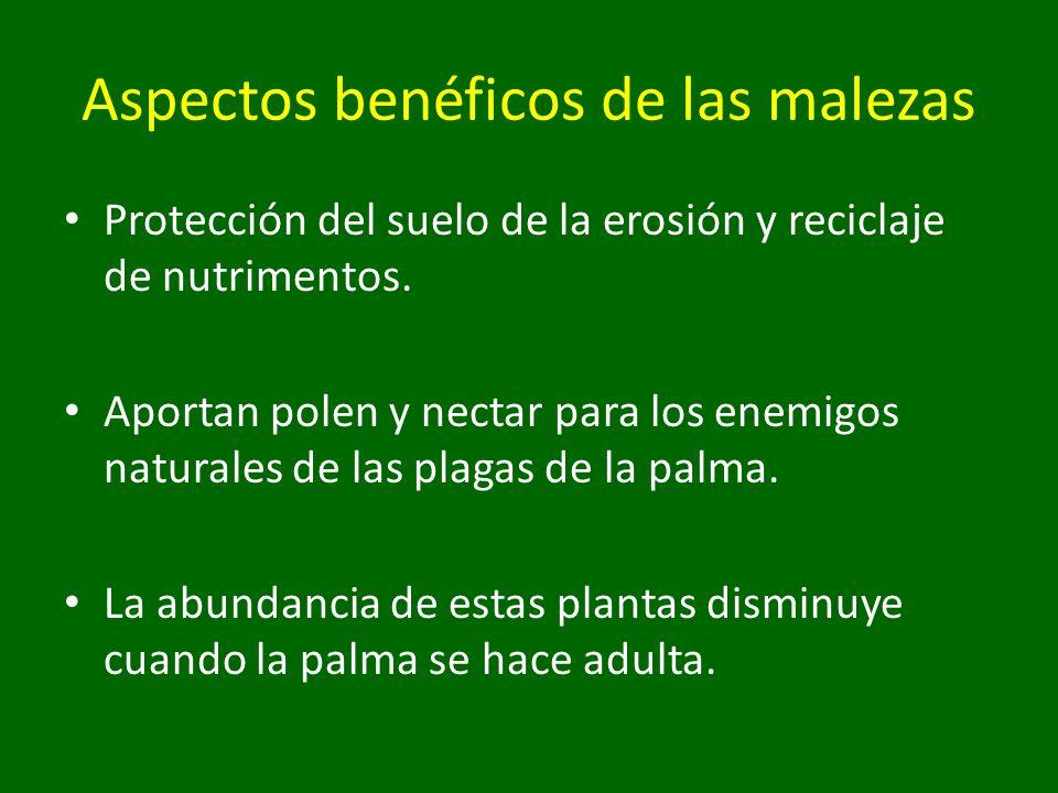 Protección del suelo de la erosión y reciclaje de nutrimentos. Aportan polen y nectar para los enemigos naturales de las plagas de la palma. La abunda