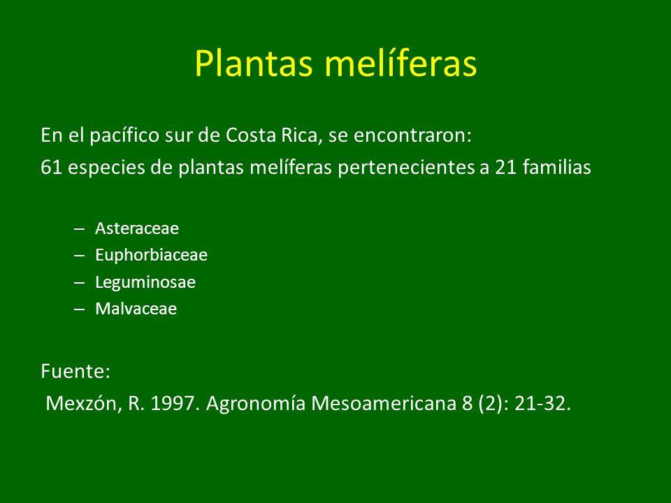 Plantas melíferas En el pacífico sur de Costa Rica, se encontraron: 61 especies de plantas melíferas pertenecientes a 21 familias – Asteraceae – Eupho