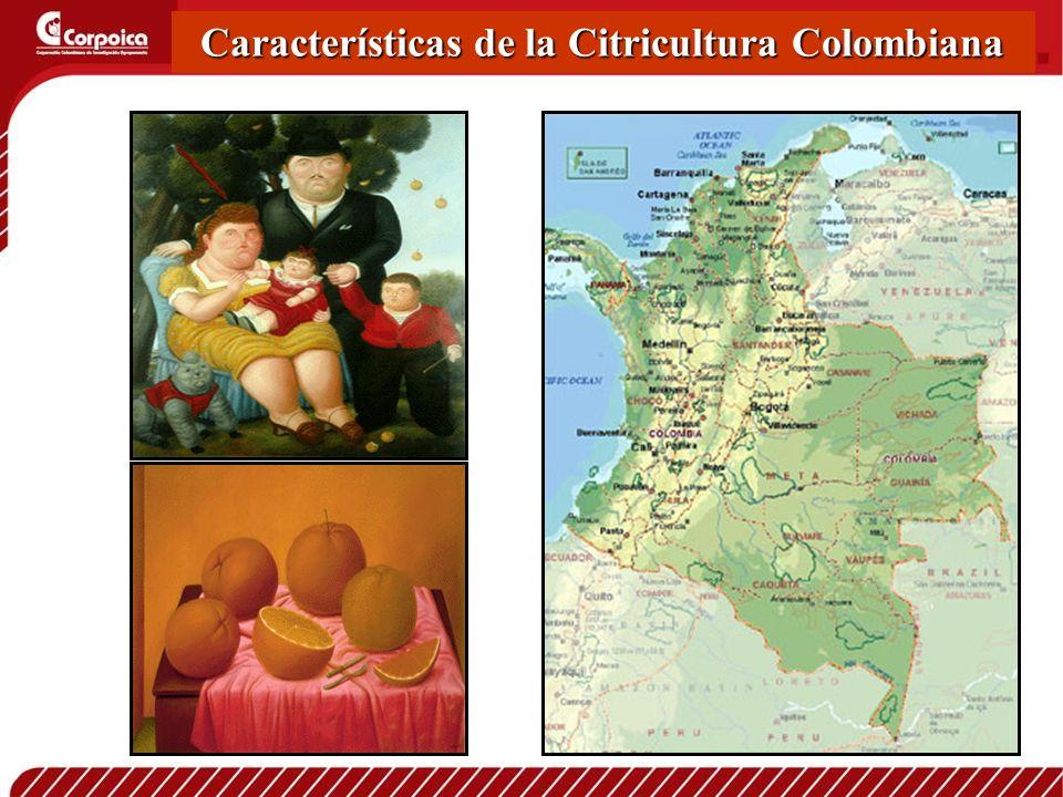 Características de la Citricultura Colombiana
