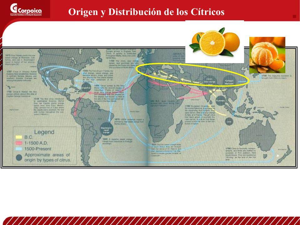 Origen y Distribución de los Cítricos
