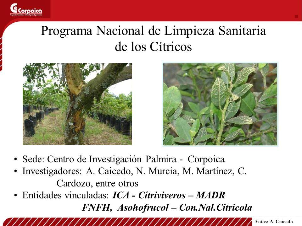 Programa Nacional de Limpieza Sanitaria de los Cítricos Sede: Centro de Investigación Palmira - Corpoica Investigadores: A. Caicedo, N. Murcia, M. Mar