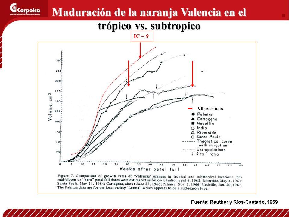 IC = 9 Maduración de la naranja Valencia en el trópico vs. subtropico Fuente: Reuther y Ríos-Castaño, 1969 Villavicencio