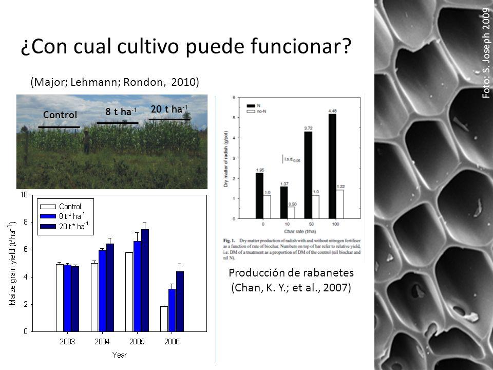 ¿Con cual cultivo puede funcionar? Foto: S. Joseph 2009 Control 8 t ha -1 20 t ha -1 Producción de rabanetes (Chan, K. Y.; et al., 2007) (Major; Lehma