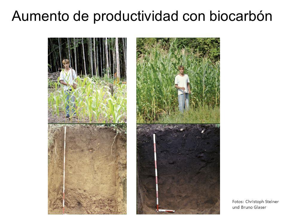 Aumento de productividad con biocarbón Fotos: Christoph Steiner und Bruno Glaser