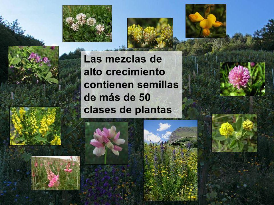 Las mezclas de alto crecimiento contienen semillas de más de 50 clases de plantas