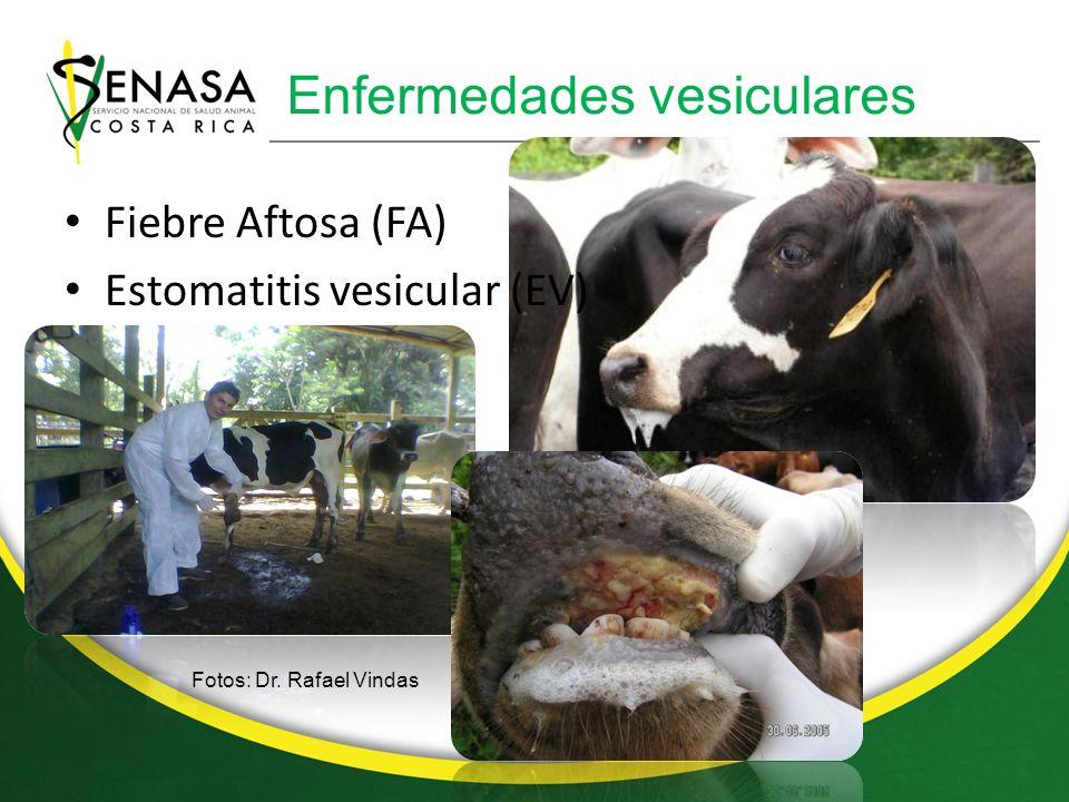 Enfermedades nerviosas en bovinos y equinos Encefalitis Espongiforme Bovina Rabia Encefalitis Equinas Foto: Dra.