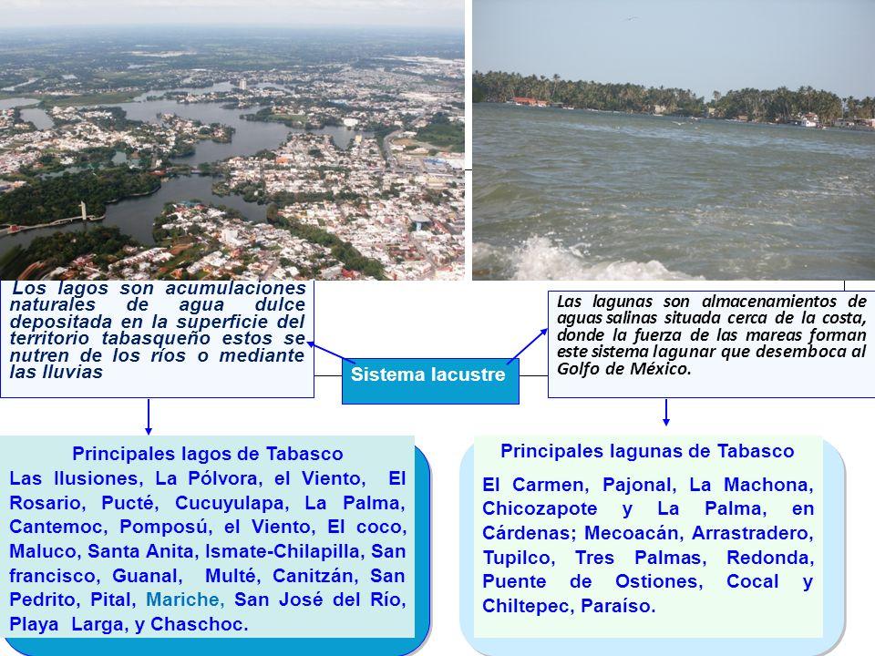 Principales lagunas de Tabasco El Carmen, Pajonal, La Machona, Chicozapote y La Palma, en Cárdenas; Mecoacán, Arrastradero, Tupilco, Tres Palmas, Redo