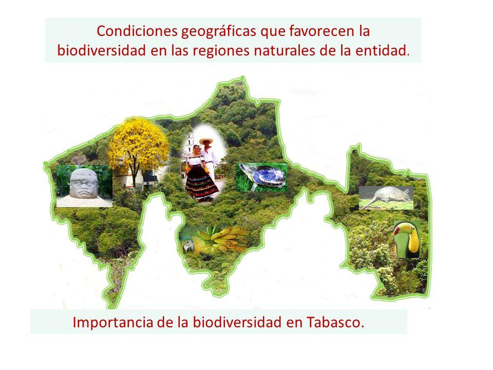 Condiciones geográficas que favorecen la biodiversidad en las regiones naturales de la entidad. Importancia de la biodiversidad en Tabasco.