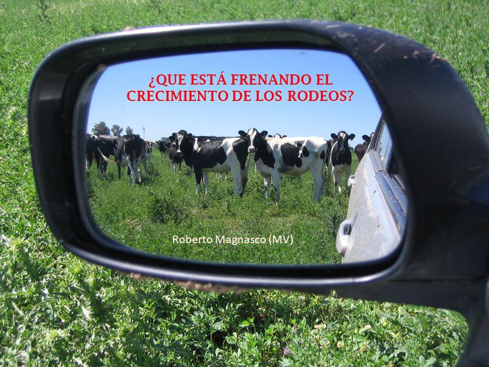 Cada tambo que se cierra elimina, por lo menos, entre un 20 y un 30% de sus vacas.
