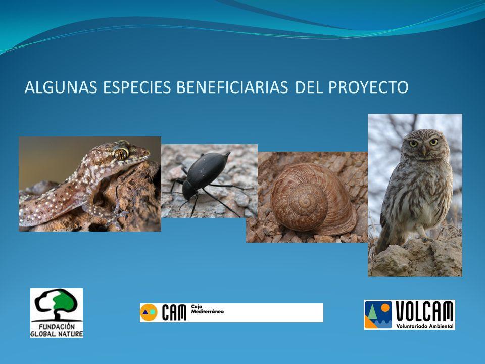 Responsable del proyecto: Pilar Sánchez Sánchez Voluntarios/as participantes: 18-20 según sesión.