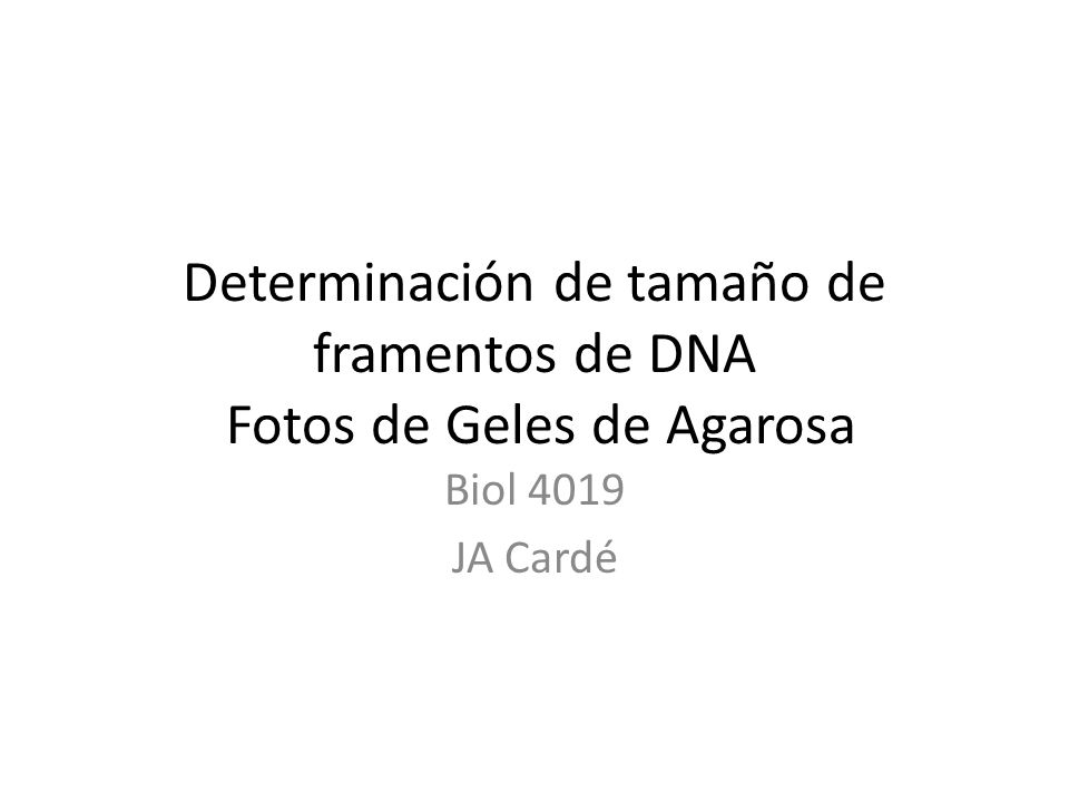 Determinación de tamaño de framentos de DNA Fotos de Geles de Agarosa Biol 4019 JA Cardé