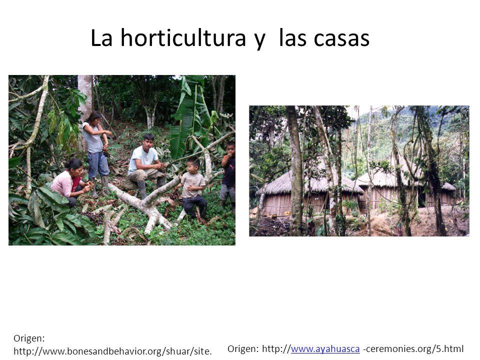 La horticultura y las casas Origen: http://www.bonesandbehavior.org/shuar/site. html Origen: http://www.ayahuasca -ceremonies.org/5.htmlwww.ayahuasca