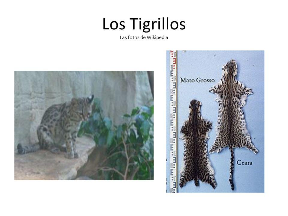 Los Tigrillos Las fotos de Wikipedia