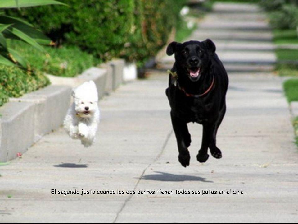 El segundo justo cuando los dos perros tienen todas sus patas en el aire…
