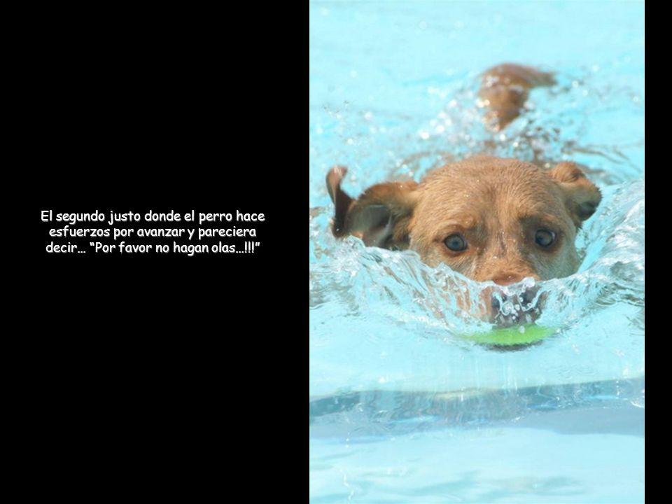 El segundo justo donde el perro hace esfuerzos por avanzar y pareciera decir… Por favor no hagan olas…!!!