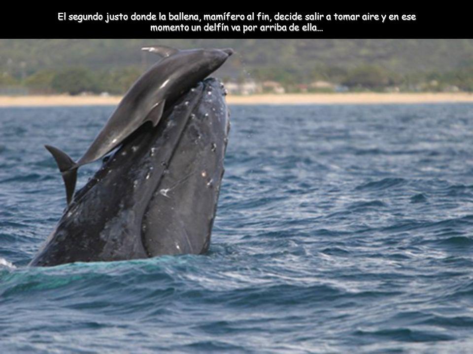 El segundo justo donde la ballena, mamífero al fin, decide salir a tomar aire y en ese momento un delfín va por arriba de ella…