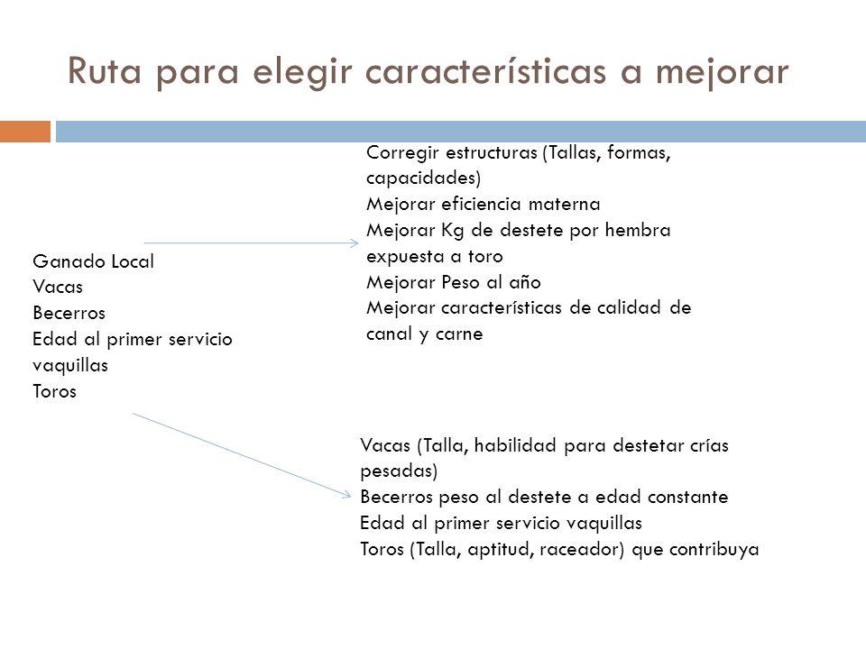 Consideraciones finales Las DEPs incrementan el conocimiento que se necesita para seleccionar las características para las que fueron calculadas Las DEPs no corrigen todas las deficiencias, pero son útiles para realizar hacer la selección por el verdadero mérito genético del toro