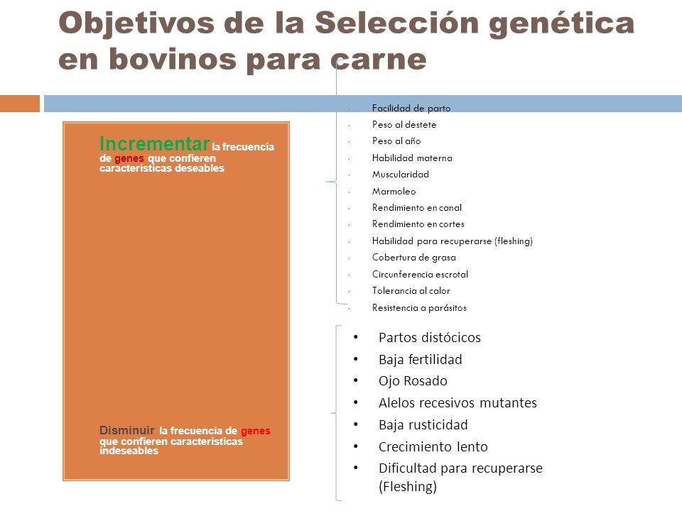 Objetivos de la Selección genética en bovinos para carne 1.
